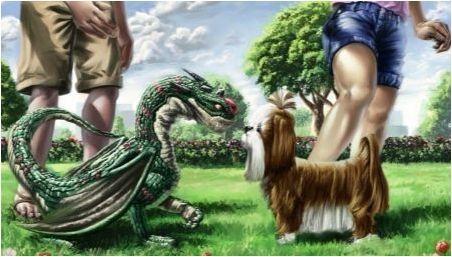 Съвместимост на драконите и кучетата в различни аспекти на живота